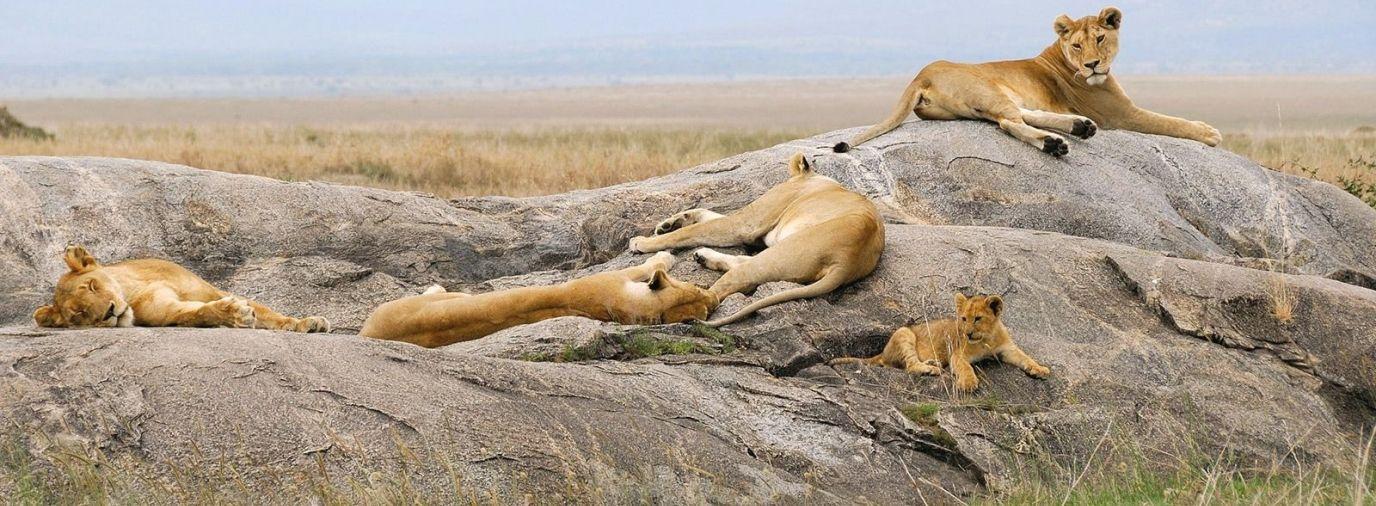 Christmas Day Trip – Ngorongoro Crater